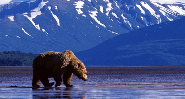 Agencija za selidbe Aljaska