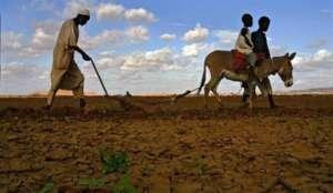 Medjunarodne selidbe Afrika